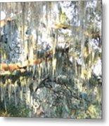Mossy Live Oak Metal Print