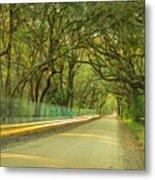 Mossy Oaks Canopy In South Carolina Metal Print