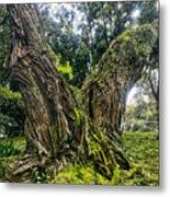 Mossy Old Tree Metal Print