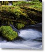 Mossy Rocks Oregon 3 Metal Print