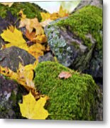 Mossy Stones And Maple Leaves Metal Print