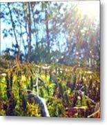 Mossy Sunburst Metal Print