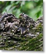 Mossy Tree Knot Metal Print