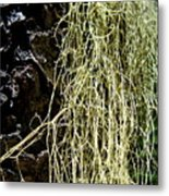 Mossy Tree Metal Print