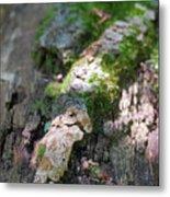 Mossy Tree Metal Print