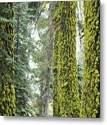 Mossy Trees Metal Print
