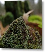 Mossy Wood 007 Metal Print