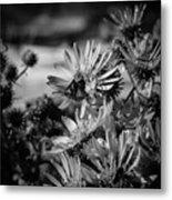 Moth And Flowers Metal Print