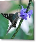 Moth On Blue Flower Metal Print