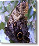 Moth On Blue Flowers Metal Print