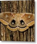Moth On Cedar Tree Metal Print