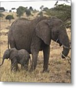 Mother And Baby Elephant Metal Print