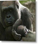 Mother And Child Gorillas4 Metal Print