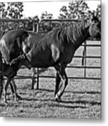 Mother And Child. Metal Print