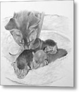 Mother Cat Washing Kittens Metal Print