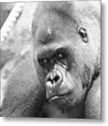 Mother Gorilla In Thought Metal Print