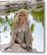 Mother Monkey Metal Print