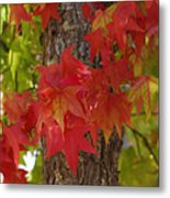 Mother Nature's Style Metal Print