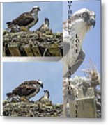 Motherly Love Raptor Style Metal Print