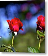 Mother's Day Roses Blank Metal Print