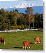 Mount Baker From Langley Bc Metal Print by Marion McCristall