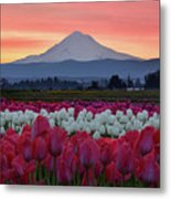 Mount Hood Sunrise With Tulips Metal Print