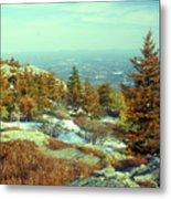 Mount Monadnock Spruce Injury Metal Print