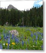 Mount Sneffels Lupine Landscape Metal Print