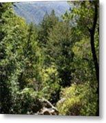 Mount Tamalpais Forest View Metal Print