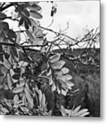 Mountain Ash - Fairbanks Alaska - Monochrome Metal Print