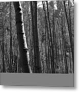 Mountain Aspens Metal Print