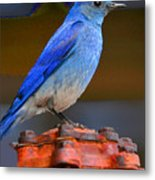 Mountain Blue Bird Metal Print