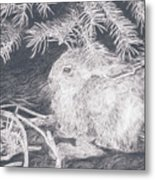 Mountain Cottontail Metal Print