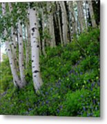 Mountain Flowers And Aspen Metal Print
