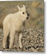 Mountain Goat Kid Metal Print