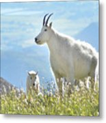 Mountain Goat Momma And Kid Metal Print