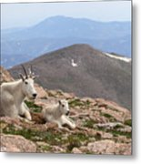Mountain Goat Mother And Kid In Mountain Home Metal Print