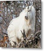 Mountain Goat Pride Metal Print