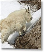 Mountain Goat With Grace Metal Print