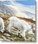 Mountain Goats 1 Metal Print
