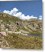 Mountain Goats At Columbine Lake - Weminuche Wilderness - Colorado Metal Print