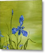 Mountain Iris Metal Print