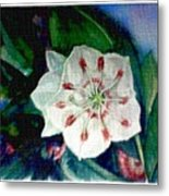 Mountain Laurel Blossom Closeup Metal Print
