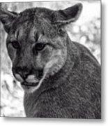 Mountain Lion Bw Metal Print