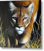 Mountain Lion In Tall Grass Metal Print