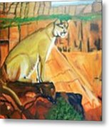 Mountain Lion In Thought Metal Print