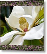 Mountain Magnolia Metal Print by Bell And Todd