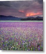 Mountain Meadow Purple Metal Print