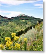 Mountain Meadows Metal Print
