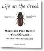 Mountain Pine Beetle Color Metal Print